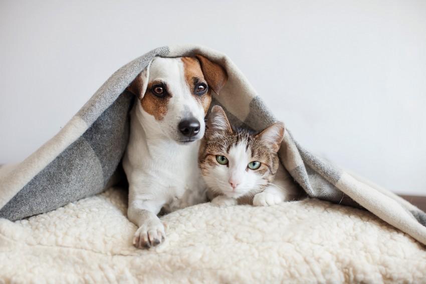 Mitos e verdades sobre gripe de cães e gatos